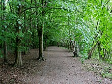 Woodland Path at High Elms Country Park (3).jpg