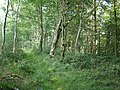 Woodland path, above Underdown Moor - geograph.org.uk - 1417006.jpg