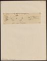 Xiphostoma lucius - 1700-1880 - Print - Iconographia Zoologica - Special Collections University of Amsterdam - UBA01 IZ14700081.tif