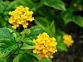 Yellow flower1.jpg
