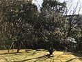 Yusentei Park 11.jpg