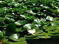 Zugdidi botanical garden2.jpg