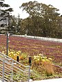"""Green Roof"" of California Academy of Sciences - ""Telhado Verde"" California Academia de Ciencia - panoramio (2).jpg"