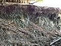 (Verdete, toazeiro) fonte natural de potássio exposta no município de Arapuá MG região do Alto Paranaíba. - panoramio.jpg