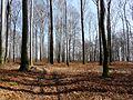 Łaziska Górne, Poland - panoramio (12).jpg