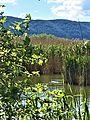 Εμβια ομορφια της λιμνης.jpg