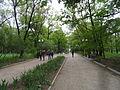 Аллея парка М. Горького.JPG