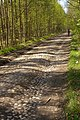 Булыжная дорога, с.Катумы - р.Авлога. Cobblestone road. - panoramio.jpg