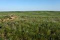 Вид с высоты в юго-восточном направлении. Степь в начале лета - panoramio.jpg