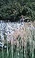 Выставка сельхозпродукции 06.jpg