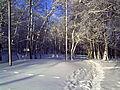 Зима 81.JPG