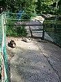 Зоологічний парк - тварини в парку.jpg