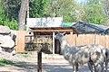Киевский зоопарк (78).jpg