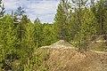 Лес. Якша MG 7783.jpg
