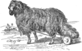 Овца (БЭАН).png