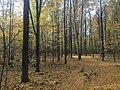 Осінній ліс, Садове.jpg