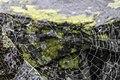 Полярный Урал, Югыд ва, паутинка на горе.jpg
