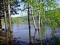 После аварии на Саяно -Шушенской ГЭС.Большая вода на Енисее. - panoramio.jpg