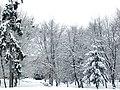 Радивилівський центральний парк взимку.JPG