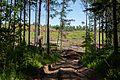 Рубка леса - panoramio.jpg