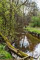 Річка Замишівка.jpg