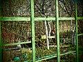 Сады 3 - panoramio.jpg