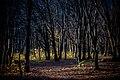 Травневий ліс.jpg