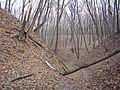 Украина, Киев - Голосеевский лес 261.JPG