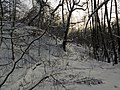 Украина, Киев - Голосеевский лес 79.jpg