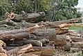 Уничтожение леса в жилой зоне поселения Кокошкино.jpg