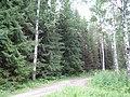 Центральный ботанический сад (23.07.2007) - panoramio - sergfokin.jpg