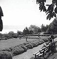 בגן הציבורי בטבריה-JNF014277.jpeg
