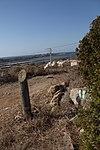 מבצר עתלית - אתרי מורשת במישור החוף 2016 (32).jpg