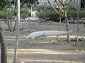 باغ پرندگانGarden Birds - panoramio (1).jpg
