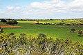 حقول القمح.jpg