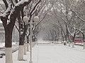 山东农业大学 - panoramio - ncf007 (3).jpg