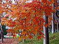 藤井寺市野中2丁目 野中神社にて 2012.12.11 - panoramio.jpg