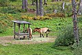 00 2879 Nationalpark Bayerischer Wald - Wildpferde.jpg