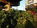 01273jfCircumferential Road 26 Bagong Ilog Pasig Boulevard Flyover Vargas Centennial Bridgefvf.jpg