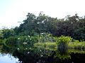 016 Amazonas TaniaFraga 17.JPG