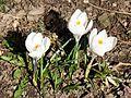 05136 spring in beskidy.JPG