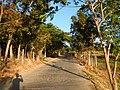0581jfLandscapes Mabalas Diliman Salapungan Paddy fields San Rafael Bulacan Roadsfvf 05.JPG