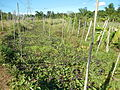 0581jfLandscapes Roads Vegetables Fields Binagbag Angat Bulacanfvf 26.JPG