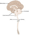 1601 Anatomical Underpinnings of the Neurological Exam-02.jpg