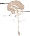 1601 Anatomical Underpinnings of the Neurological Exam-02.jpg
