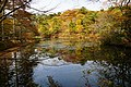 171125 Kobe Municipal Forest Botanical Garden17s3.jpg