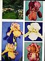 1959 Cooley's Gardens (1959) (16050908213).jpg