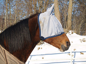 Fly mask - Horse wearing a fly mask with ear covers.