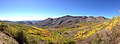 2014-10-04 13 47 51 Panorama of Aspens during autumn leaf coloration from Charleston-Jarbidge Road (Elko County Route 748) in Copper Basin about 10.2 miles north of Charleston, Nevada.jpg