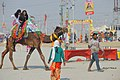 2019 Jan 16 - Kumbh Mela - Camel Ride in the Holiest of Sectors.jpg